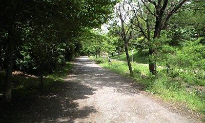 100528通り道.JPG
