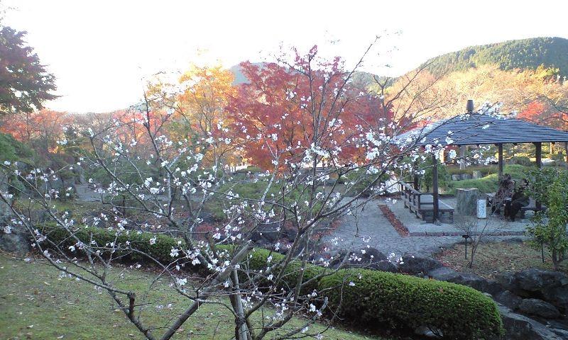 冬桜8.JPG